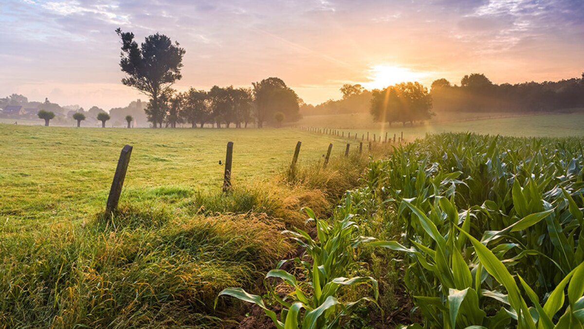 Understanding Section 1031 Tax Exchanges When Buying Land